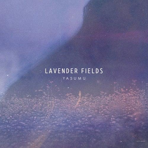 Lavender Fields by Yasumu