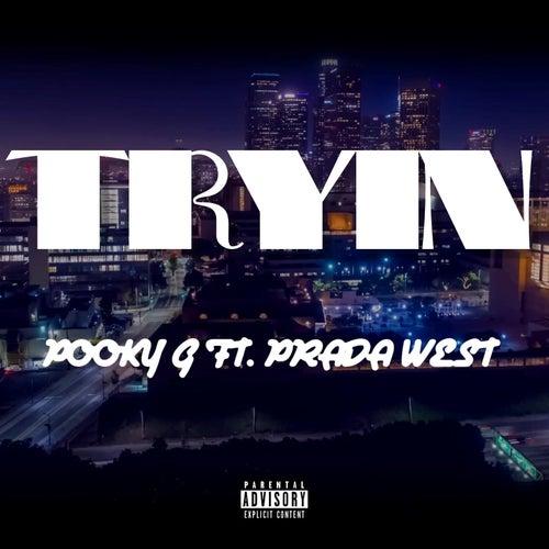 Tryin by Pooky G