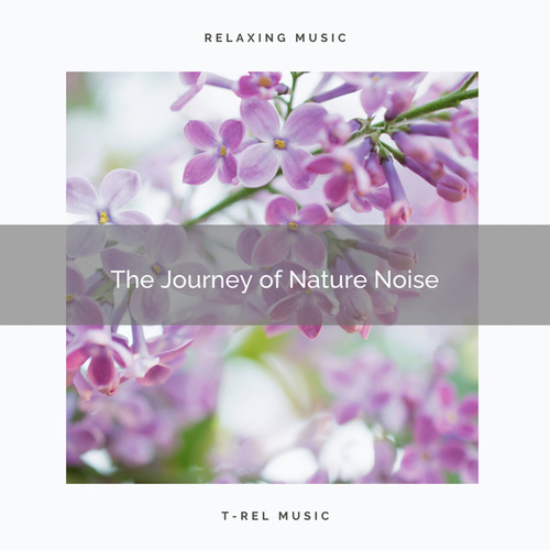 ! ! ! ! ! The Journey of Nature Noise by Nature Soundscape