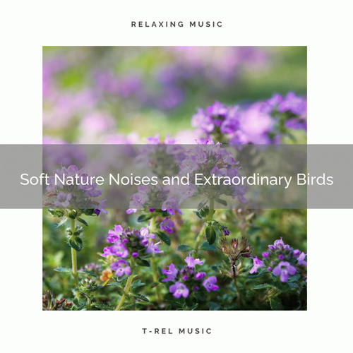 ! ! ! ! ! Soft Nature Noises and Extraordinary Birds by Nature Soundscape