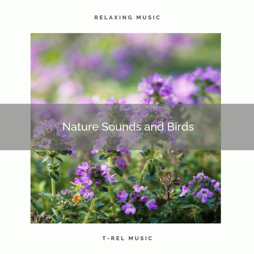 ! ! ! ! ! Nature Sounds and Birds by Nature Soundscape