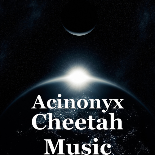 Cheetah Music by Acinonyx