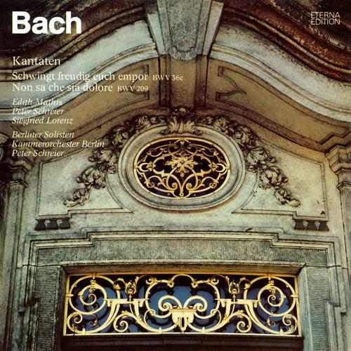 Bach: Schwingt freudig euch empor, BWV 36c / Non sa che sia dolore, BWV 209 de Edith Mathis