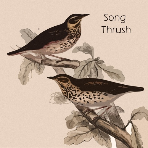 Song Thrush von Tony Bennett