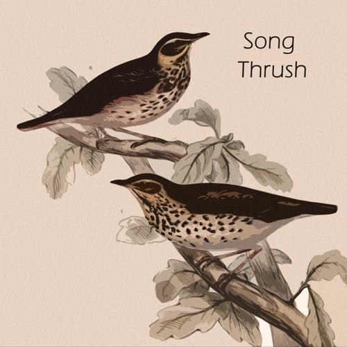 Song Thrush by Bill Evans