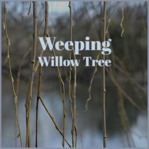 Weeping Willow Tree by Various Artists