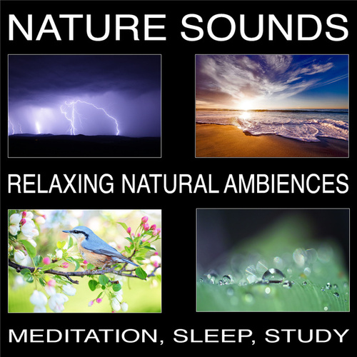 Nature Sounds, Relaxing Natural Ambiences, Meditation, Sleep, Study von Pat Barnes