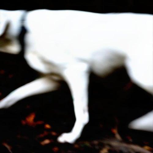Dog by Tim Schmidt