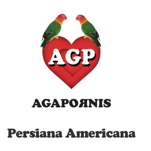 Persiana Americana de Agapornis
