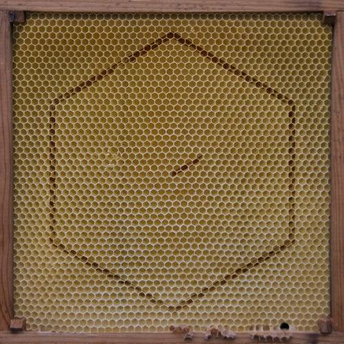 Beekeeper (incl. Home EP) von Rangleklods